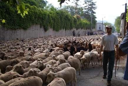 La capra nel gregge storie di pascolo vagante for Cattura per capre